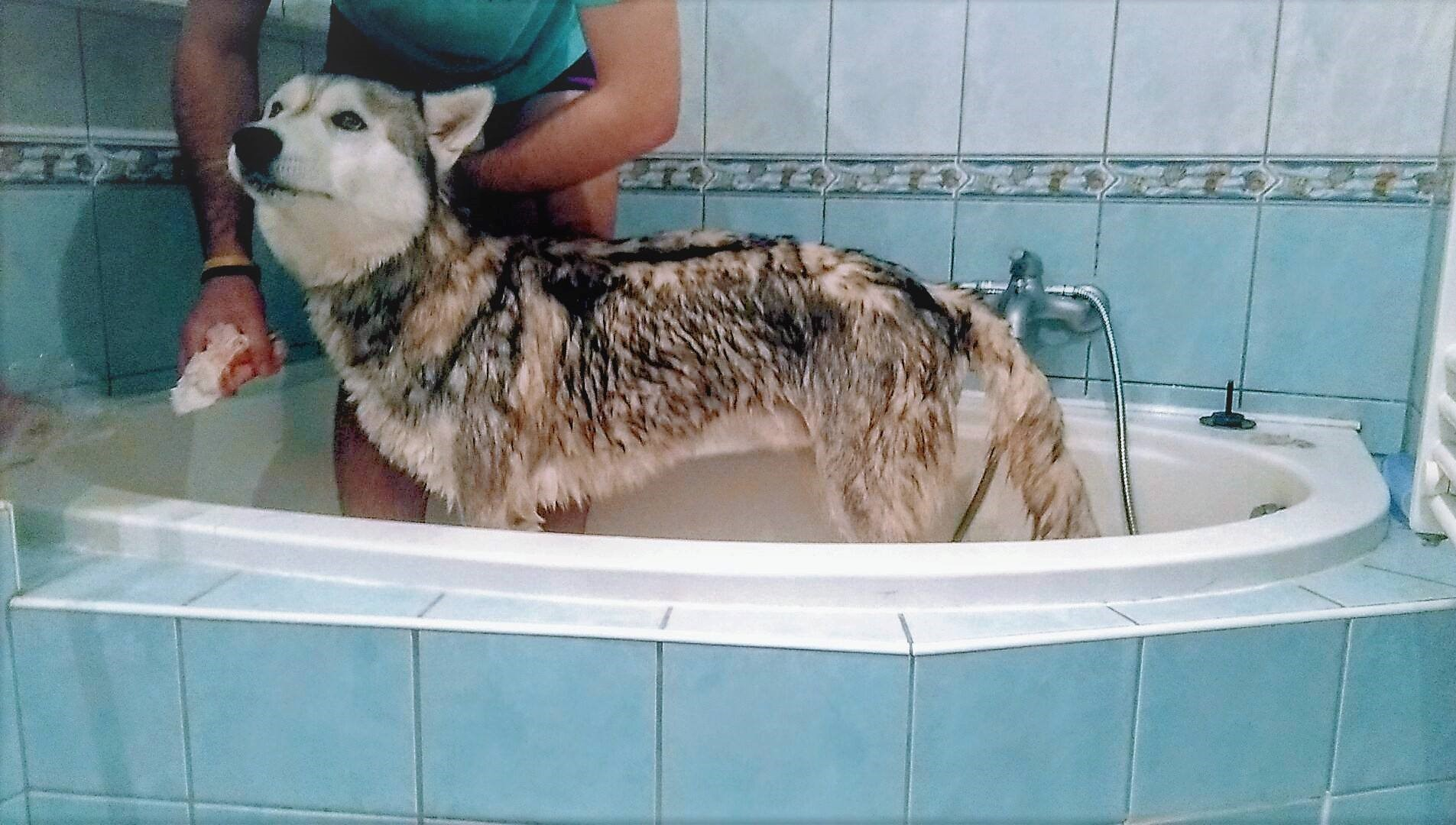 kupanie psa